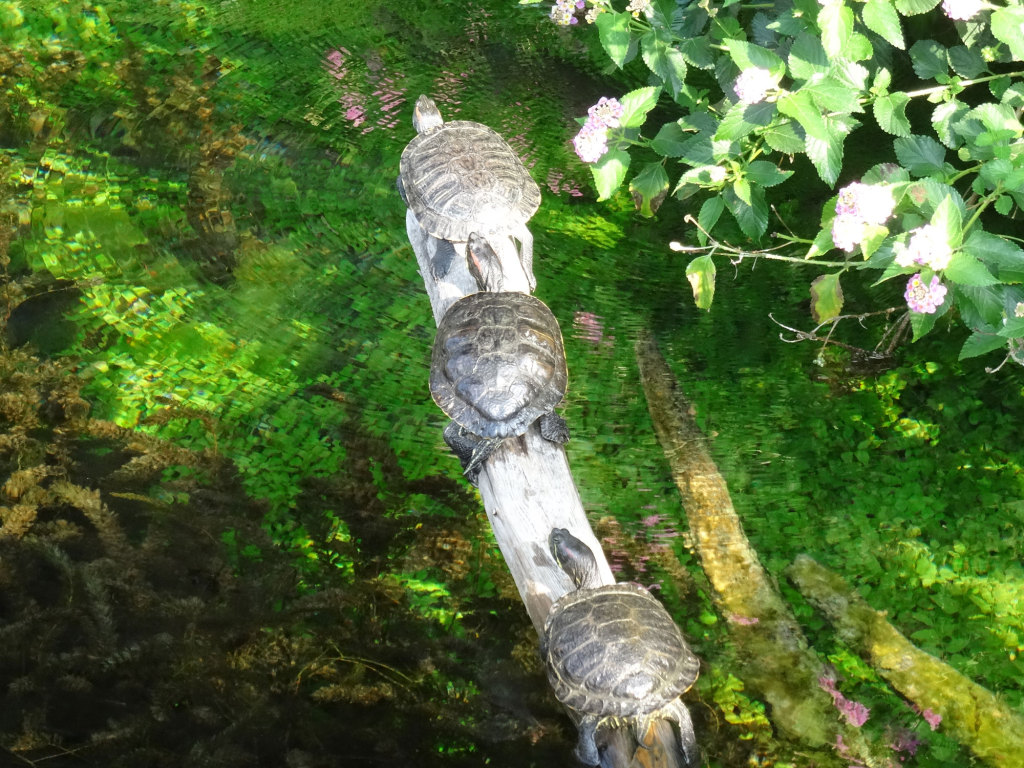 Das Wasser ist entsprechend kalt und die Schildkröten liegen Schlange