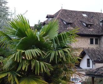 DSC00357-Südtirol---Kaltern---Goldgasse