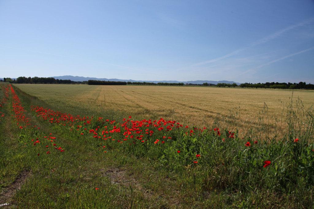 Landschaft nahe Vada