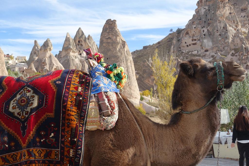 Ein Kamel mit vielen Höckern