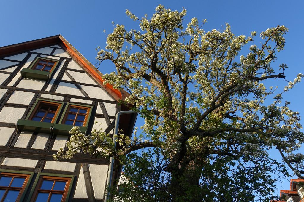 Eisenach-Stedtfeld