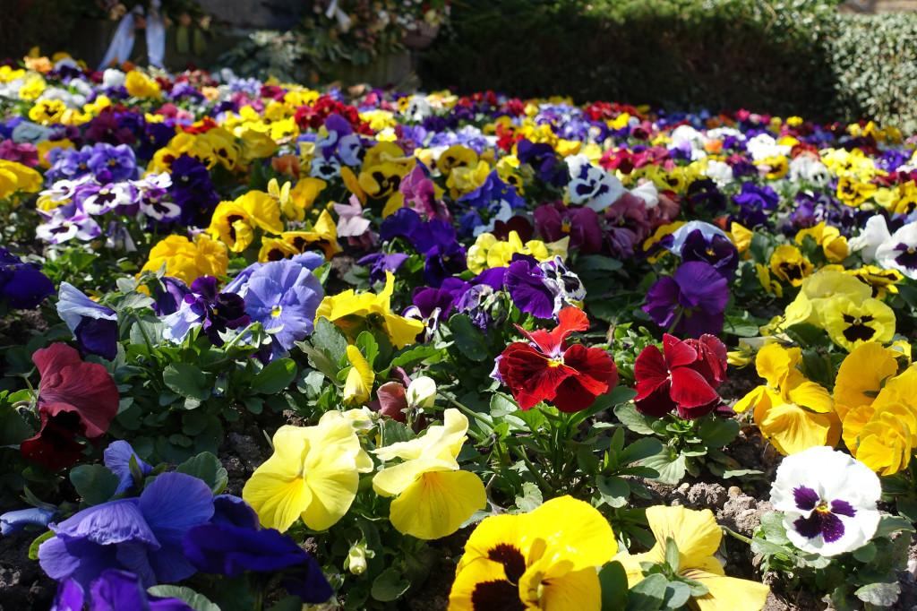 Frühling!!!