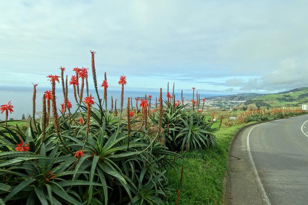 Blick zurück auf den Ort Vila Franca do Campo