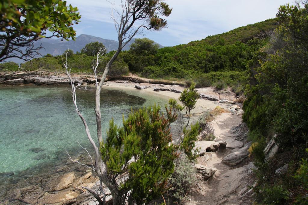 IMG_6549 Korsika 17 - Wanderung Plage de Lotu nach St. Florent