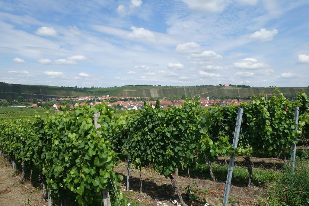 Im Vordergrund Nordheim, dahinter, auf der anderen Seite des Mains Escherndorf und rechts oben die Vogelsburg
