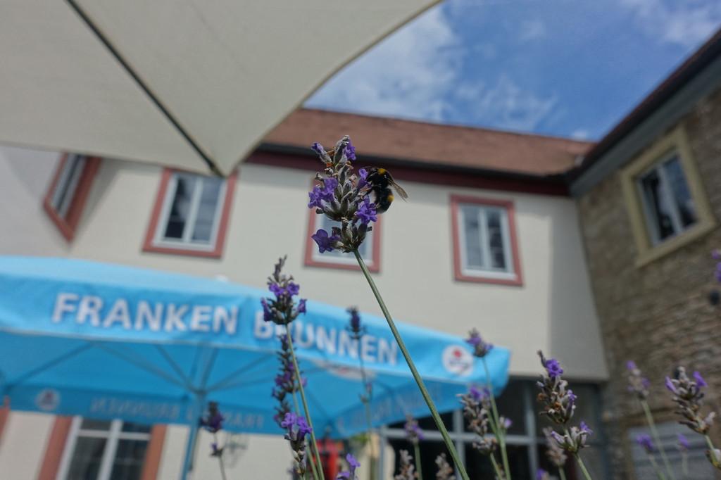 """Im Restaurant """"Zum Schwan"""" in Sommerach - auch die Hummel wird gut versorgt"""