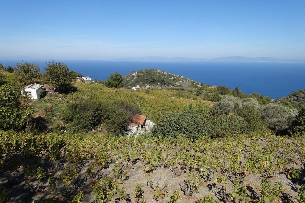 Auf dem Weg nach Vourliotes, hier wird Wein angebaut