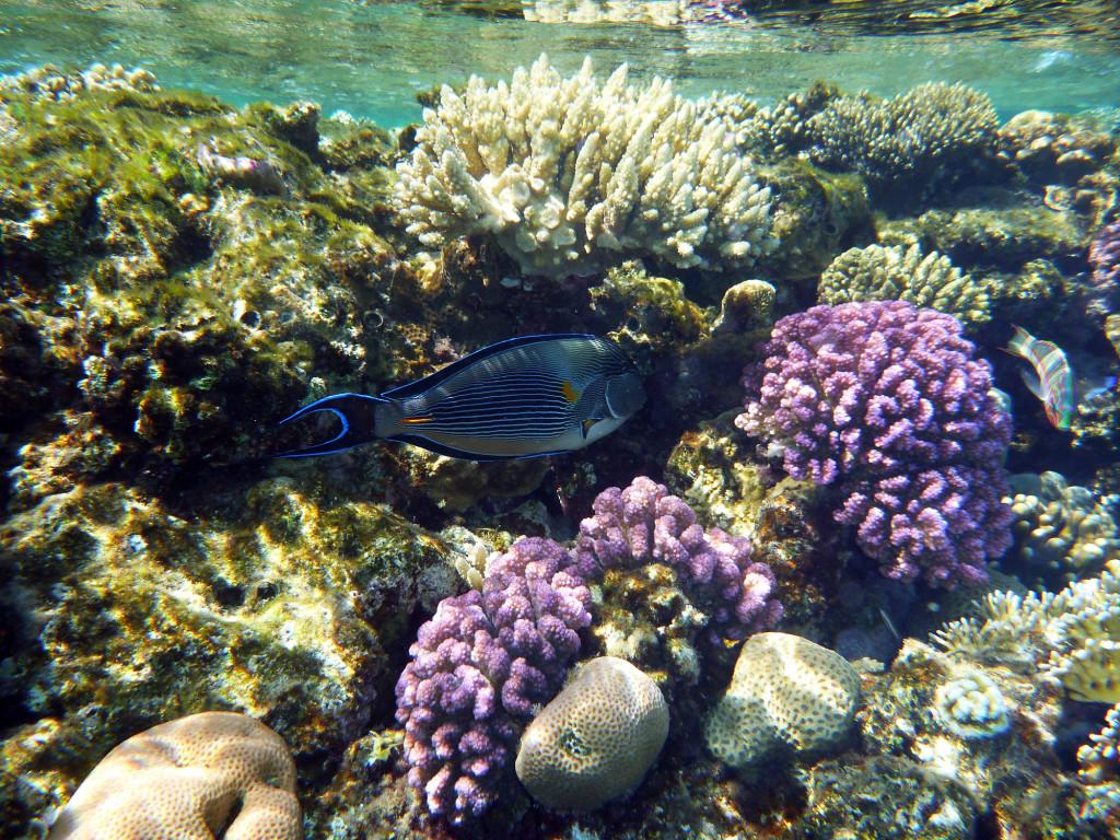 P1020692 2010 04 Four Seasons - Sharm el Sheik - Unter Wasser