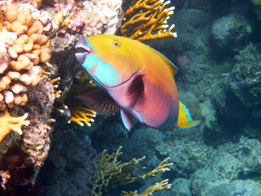 P1030168 2010 04 Four Seasons - Sharm el Sheik - Unter Wasser