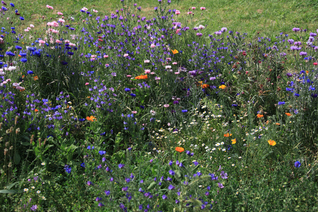 Avignon - Blütenpracht am Ufer der Rhône