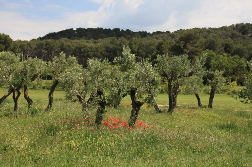 Das ist die Provence - auf dem Rückweg nach Maussane-les-Alpilles