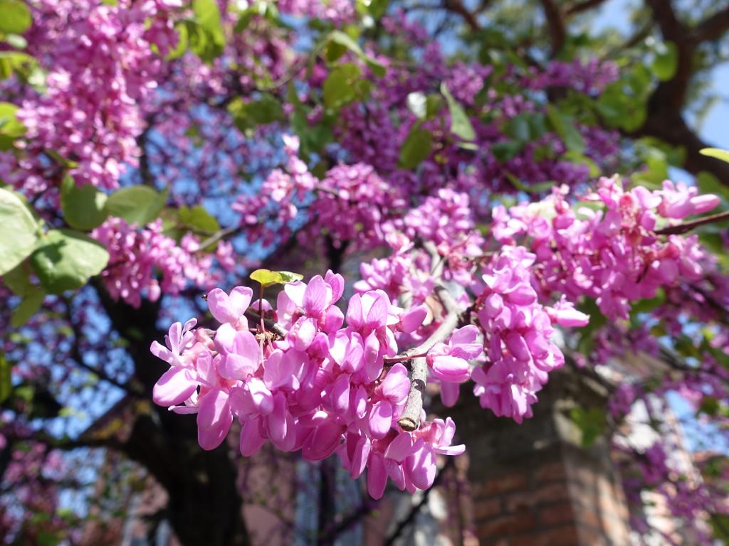 Rimini - Blütenpracht