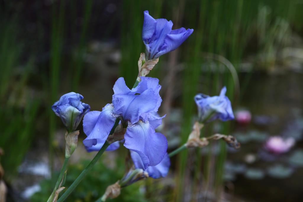 Und hübsche Blumen gibt es auch