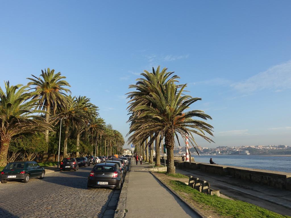 Palmenallee am Douro